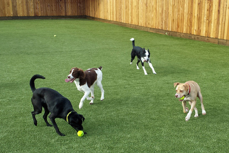 Five Full Days of Doggie Day Camp From All Paws Stay-N-Play