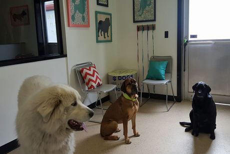 Unleashed Grooming, Boarding & Dog Daycare