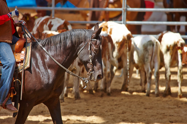 Rodeo2resized