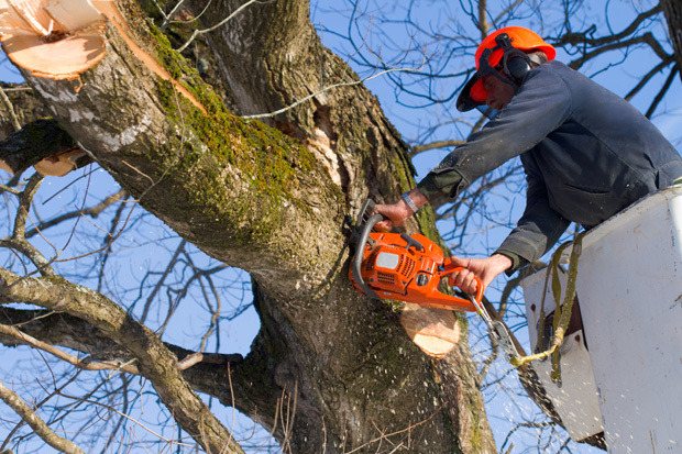 Arboristgiresized