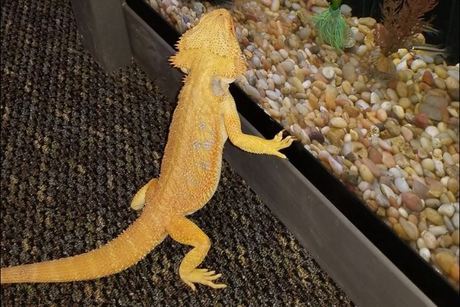 Fizards Aquatics and Exotics